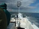 Op naar de vis