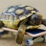 schildpad_innovate