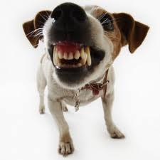 hond met tanden
